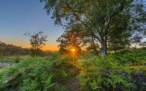 Картинка лето, небо, солнце, лучи, свет, деревья, закат, ветки, дерево, заросли, поляна, папоротник