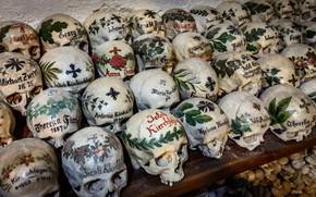 Картинка фон, кости, черепа