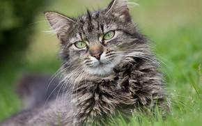 Картинка кошка, глаза, взгляд