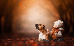Картинка осень, лес, взгляд, морда, листья, ветки, природа, лицо, поза, туман, парк, настроение, листва, ребенок, ситуация, …