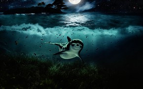 Картинка Вода, Ночь, Взгляд, Луна, Дельфин, Арт, Подводный мир, Водоросли
