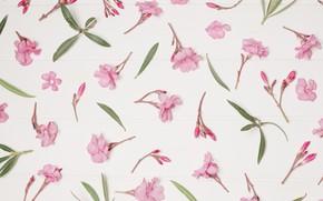Картинка цветы, фон, розовые, pink, flowers, floral