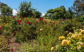 Картинка зелень, небо, солнце, деревья, цветы, парк, Калифорния, США, кусты, South Coast Botanic Garden