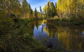 Картинка лес, лето, небо, деревья, пейзаж, природа, ели, берёзы, берега, речушка