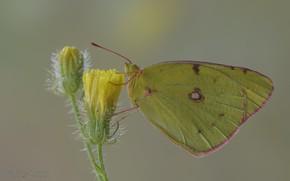 Картинка Цветы, Бабочка, Фон