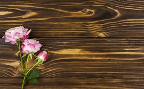 Картинка цветы, розы, розовые, wood, pink, romantic, roses
