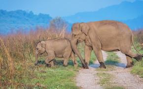 Картинка дорога, поле, трава, ветки, природа, синева, слон, малыш, помощь, пара, слоны, детеныш, мама, два, хобот, …