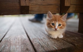 Картинка кошка, взгляд, поза, котенок, фон, доски, рыжий, мордочка, котёнок, сидит