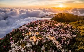 Картинка небо, листья, солнце, облака, лучи, свет, пейзаж, цветы, горы, свежесть, природа, туман, рассвет, холмы, вершины, …