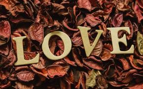 Картинка буквы, праздник, лепестки, день влюбленных