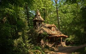 Картинка зелень, лес, дом
