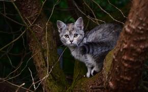 Картинка кошка, кот, взгляд, ветки, природа, поза, темный фон, котенок, серый, дерево, хвост, ствол, кора, котёнок, …
