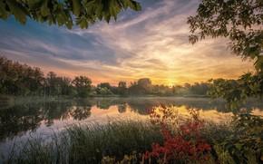Картинка небо, деревья, закат, ветки, озеро, пруд, отражение