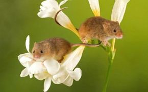 Картинка цветы, мышки, крохи