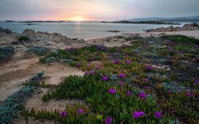 Картинка море, листья, солнце, цветы, камни, рассвет, берег, яркие, утро, горизонт, розовые, цветение
