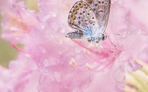 Картинка цветы, бабочка, розовые
