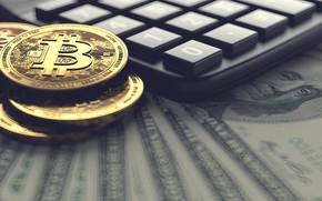 Картинка money, dollars, bitcoin, calculator