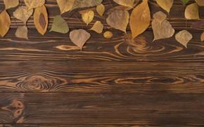 Картинка осень, листья, фон, дерево, colorful, wood, background, autumn, leaves, осенние