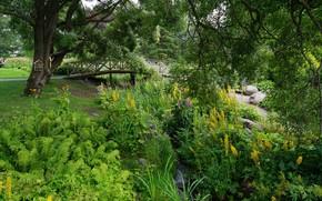 Картинка пейзаж, цветы, мост, природа, парк, дерево, красота