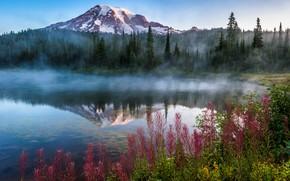 Картинка деревья, пейзаж, горы, природа, туман, озеро, США, травы, леса, луга, национальный парк, National Park, Mount …