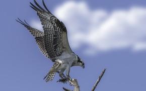 Картинка небо, птица, крылья