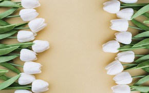 Картинка цветы, фон, букет, тюльпаны