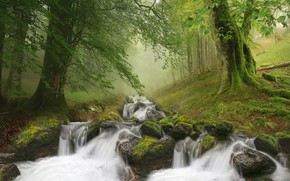Картинка лес, пейзаж, природа, туман, ручей, камни, водопад