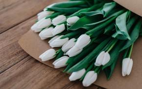 Картинка доски, букет, весна, пакет, тюльпаны, белые, бутоны, много