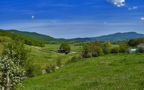 Картинка поле, лето, небо, трава, горы, природа