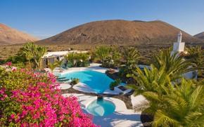 Картинка цветы, бассейн, отель, Тенерифе, Канары, Finca Malvasia