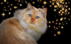 Картинка кот, взгляд, рыжий, звёздочки, тёмный фон