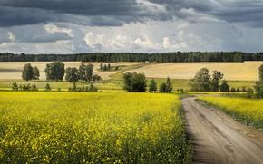 Картинка дорога, поле, лес, небо