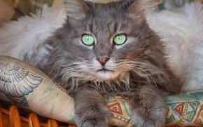 Картинка кошка, кот, взгляд, корзина, лежит, подушка, серая