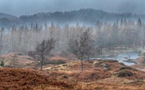 Картинка лес, природа, дождь