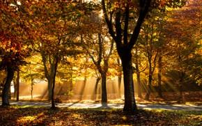 Картинка осень, свет, деревья, парк, дорожка, аллея, тропинка, золотая осень