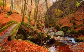Картинка Осень, Листва, Leaves, Лес, Autumn, Forest, Fall, Ручей