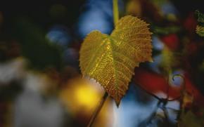 Картинка осень, лист, листок, золотистый, боке, осенний листок