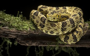 Картинка глаза, фон, змея