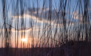 Картинка Закат, Солнце, Природа, Вечер, Восход, Трава, Растение, Утро, Рассвет, Растения, Nature, Grass, Sun, Sunset, Sunrise, …