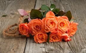 Картинка розы, букет, оранжевые, бутоны, IRINA BORT