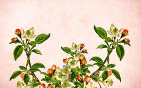Картинка цветы, ветки, фон, открытка, шаблон
