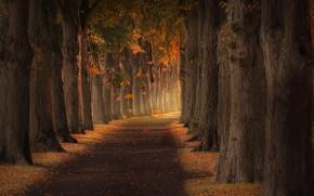 Картинка осень, листья, парк, аллея, park, autumn, leaves, alley, Dietmar Simon
