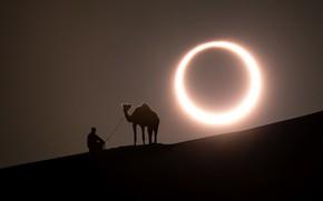 Картинка man, camel, solar eclipse