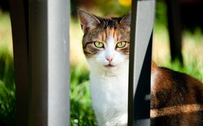 Картинка кошка, взгляд, фон, ограждение, пятнистая, трехшерстная