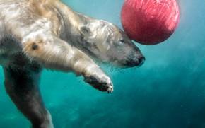 Картинка вода, мяч, белый медведь