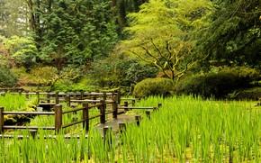 Картинка зелень, природа, озеро, растения, мостик