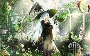 Картинка девушка, шляпа, Кот, Dress, ведьмочка, Aqua Hair