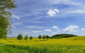 Картинка зелень, поле, небо, трава, фото