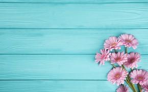 Картинка цветы, фон, букет, герберы