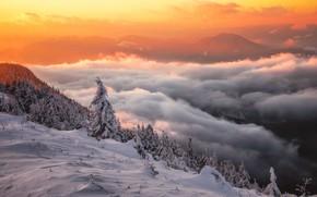 Картинка зима, облака, снег, деревья, пейзаж, закат, горы, природа, ели, склон, леса